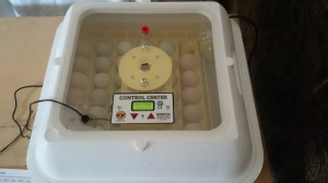 Incubator Filled With Eggs